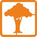 Деревья, листья